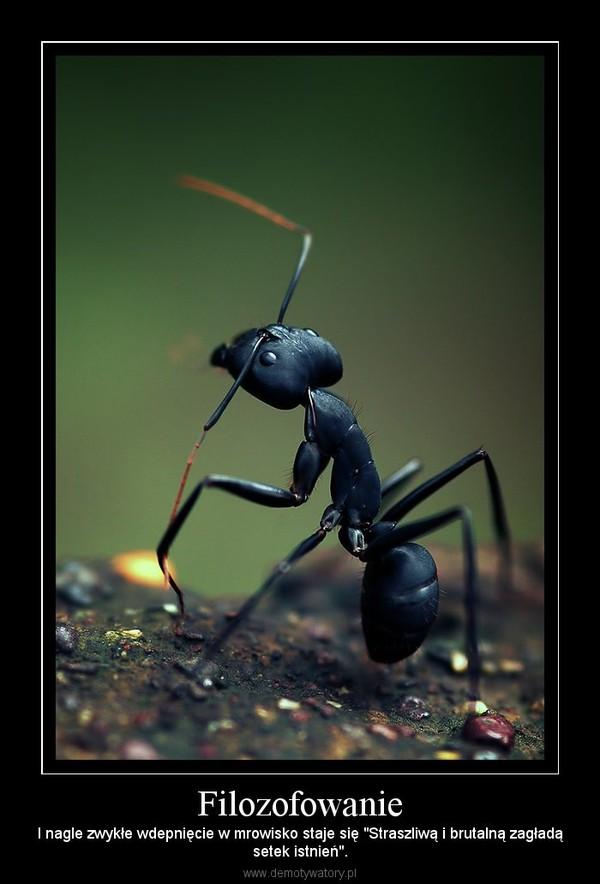"""Filozofowanie – I nagle zwykłe wdepnięcie w mrowisko staje się """"Straszliwą i brutalną zagładąsetek istnień""""."""