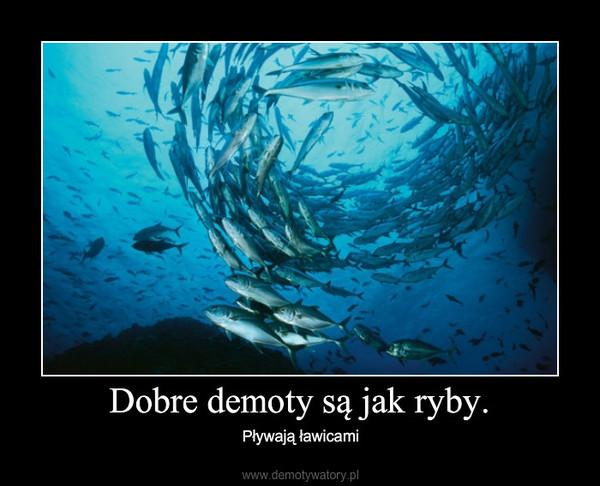 Dobre demoty są jak ryby. – Pływają ławicami