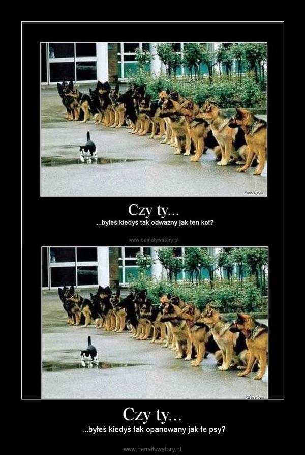 Czy ty... –  ...byłeś kiedyś tak opanowany jak te psy?
