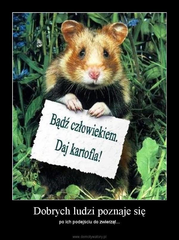 Dobrych ludzi poznaje się – po ich podejściu do zwierząt...