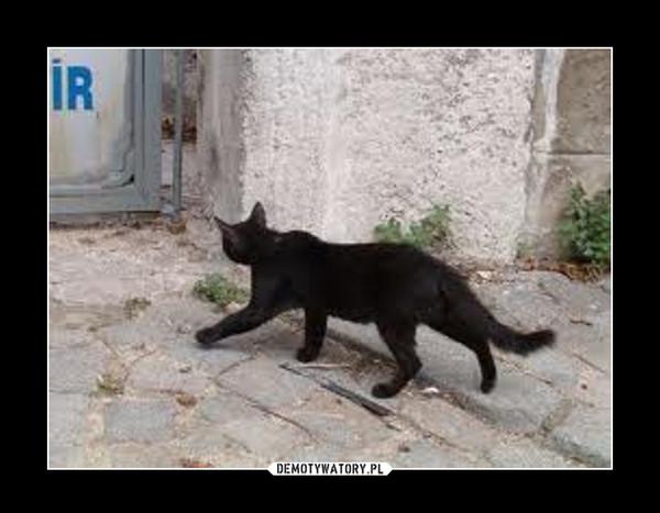 Czarny kot – Gdy Ci kot przebiegnie drogę, nie mów ,że to pech,\nUrwij kitę, wyrwij nogę, żeby szybciej zdechł.