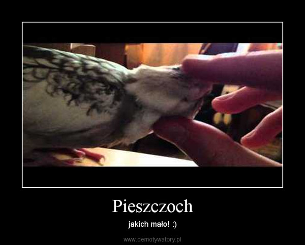 Pieszczoch – jakich mało! :)
