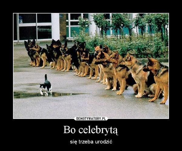 Bo celebrytą – się trzeba urodzić
