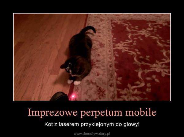 Imprezowe perpetum mobile – Kot z laserem przyklejonym do głowy!