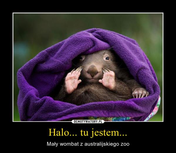 Halo... tu jestem... – Mały wombat z australijskiego zoo