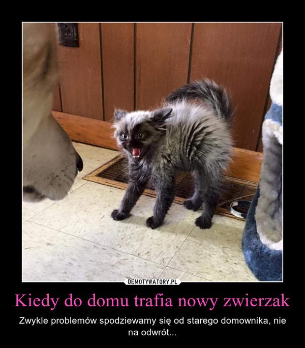 Kiedy do domu trafia nowy zwierzak – Zwykle problemów spodziewamy się od starego domownika, nie na odwrót...