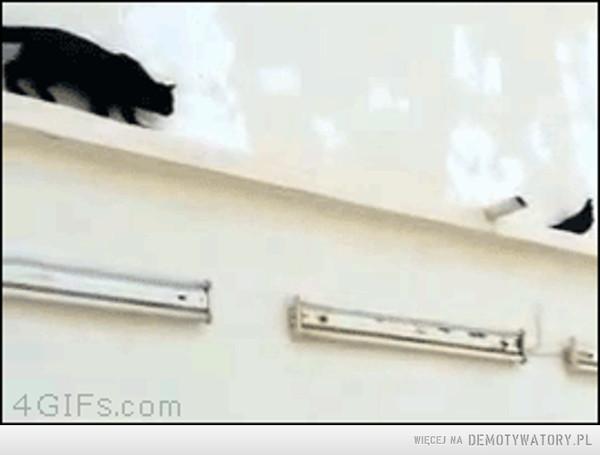 Kot ''na wstecznym'' –