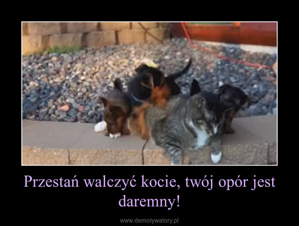 Przestań walczyć kocie, twój opór jest daremny! –