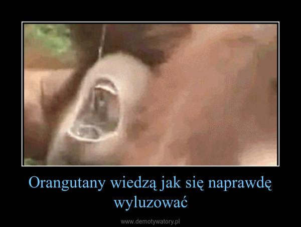 Orangutany wiedzą jak się naprawdę wyluzować –