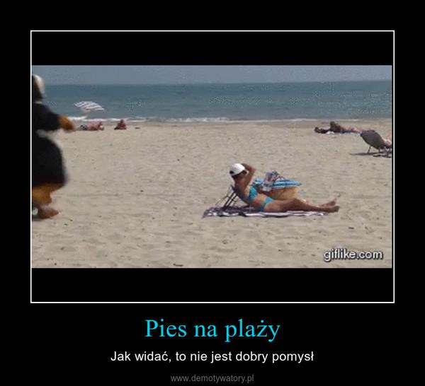 Pies na plaży – Jak widać, to nie jest dobry pomysł