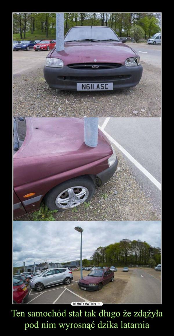 Ten samochód stał tak długo że zdążyła pod nim wyrosnąć dzika latarnia –