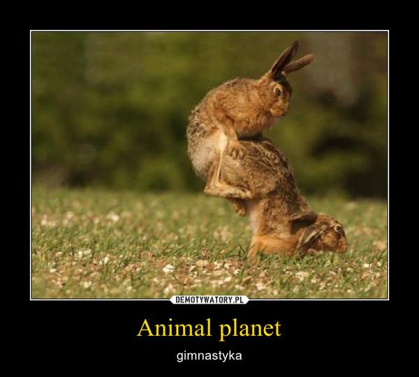Animal planet – gimnastyka