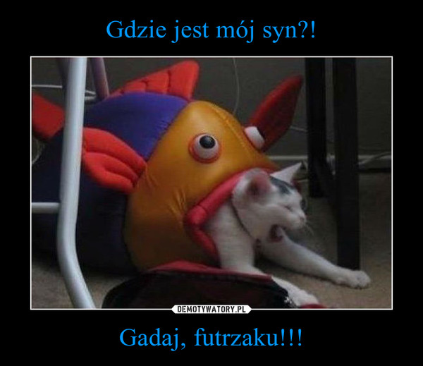 Gadaj, futrzaku!!! –