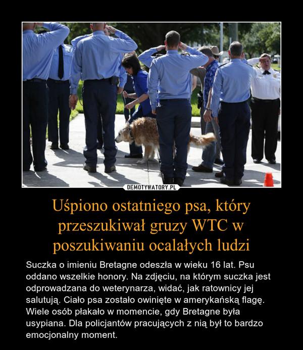 Uśpiono ostatniego psa, który przeszukiwał gruzy WTC w poszukiwaniu ocalałych ludzi – Suczka o imieniu Bretagne odeszła w wieku 16 lat. Psu oddano wszelkie honory. Na zdjęciu, na którym suczka jest odprowadzana do weterynarza, widać, jak ratownicy jej salutują. Ciało psa zostało owinięte w amerykańską flagę. Wiele osób płakało w momencie, gdy Bretagne była usypiana. Dla policjantów pracujących z nią był to bardzo emocjonalny moment.