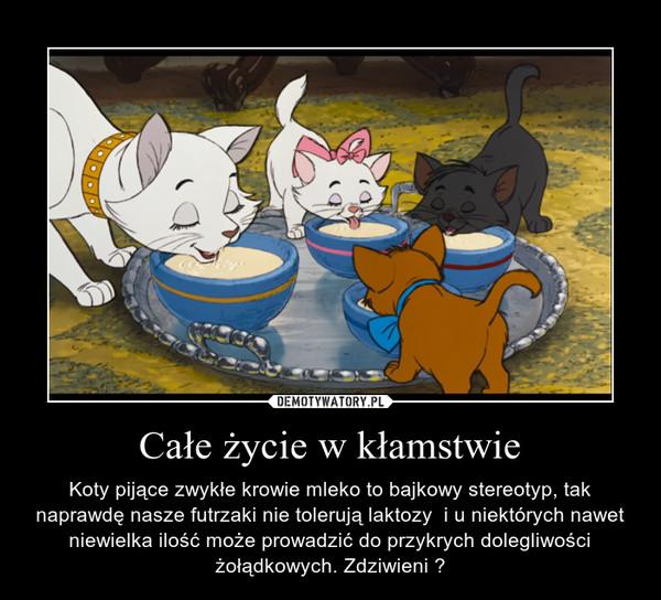 Całe życie w kłamstwie – Koty pijące zwykłe krowie mleko to bajkowy stereotyp, tak naprawdę nasze futrzaki nie tolerują laktozy  i u niektórych nawet niewielka ilość może prowadzić do przykrych dolegliwości żołądkowych. Zdziwieni ?
