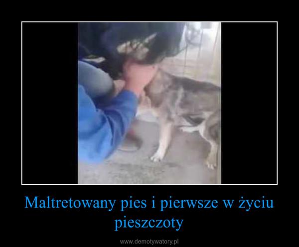 Maltretowany pies i pierwsze w życiu pieszczoty –