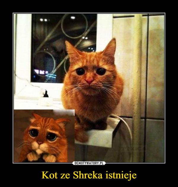 Kot ze Shreka istnieje –