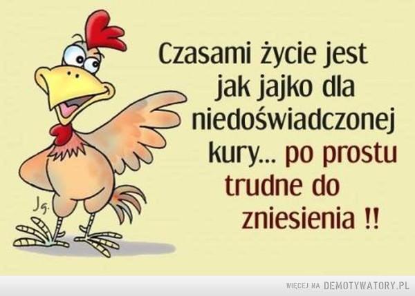 Życie –  Czasami życie jest jak jajko dlaniedoświadczonejkury... po prostutrudne dozniesienia!!