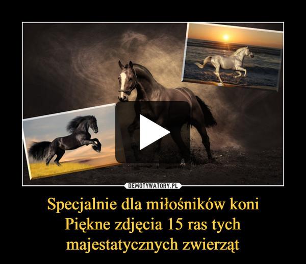 Specjalnie dla miłośników koniPiękne zdjęcia 15 ras tych majestatycznych zwierząt –
