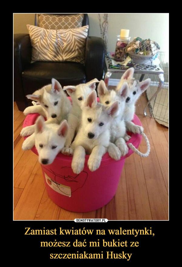 Zamiast kwiatów na walentynki, możesz dać mi bukiet ze szczeniakami Husky –