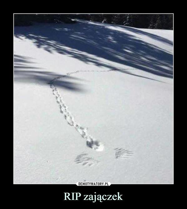 RIP zajączek –
