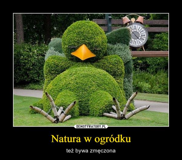 Natura w ogródku – też bywa zmęczona