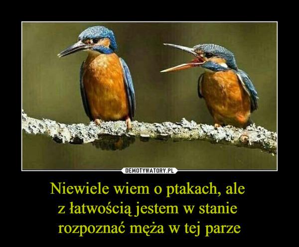 Niewiele wiem o ptakach, ale z łatwością jestem w stanie rozpoznać męża w tej parze –