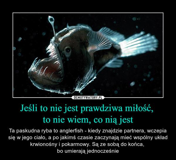 Jeśli to nie jest prawdziwa miłość, to nie wiem, co nią jest – Ta paskudna ryba to anglerfish - kiedy znajdzie partnera, wczepia się w jego ciało, a po jakimś czasie zaczynają mieć wspólny układ krwionośny i pokarmowy. Są ze sobą do końca, bo umierają jednocześnie
