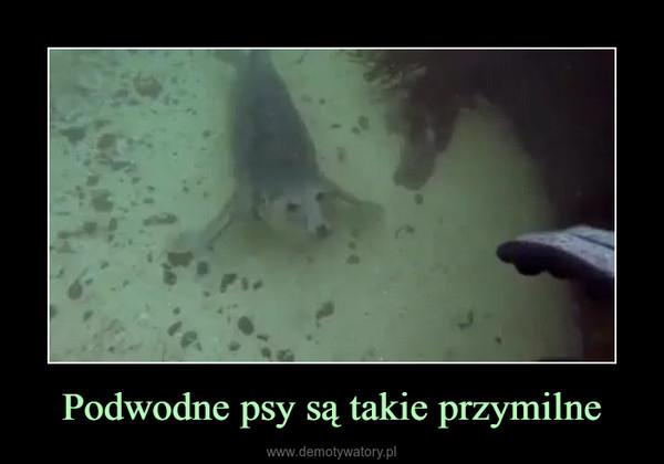 Podwodne psy są takie przymilne –