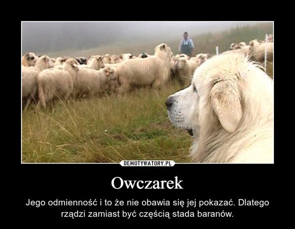 Owczarek – Jego odmienność i to że nie obawia się jej pokazać. Dlatego rządzi zamiast być częścią stada baranów.