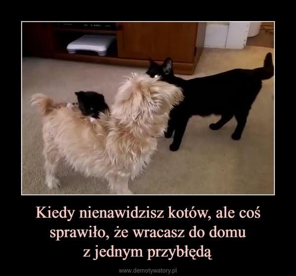 Kiedy nienawidzisz kotów, ale coś sprawiło, że wracasz do domuz jednym przybłędą –