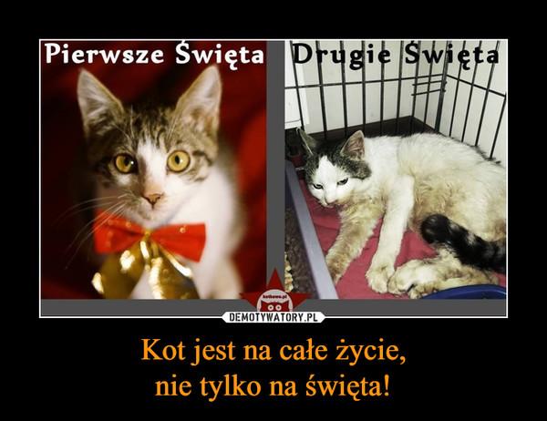 Kot jest na całe życie,nie tylko na święta! –