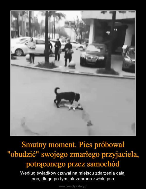 """Smutny moment. Pies próbował """"obudzić"""" swojego zmarłego przyjaciela, potrąconego przez samochód – Według świadków czuwał na miejscu zdarzenia całą noc, długo po tym jak zabrano zwłoki psa"""