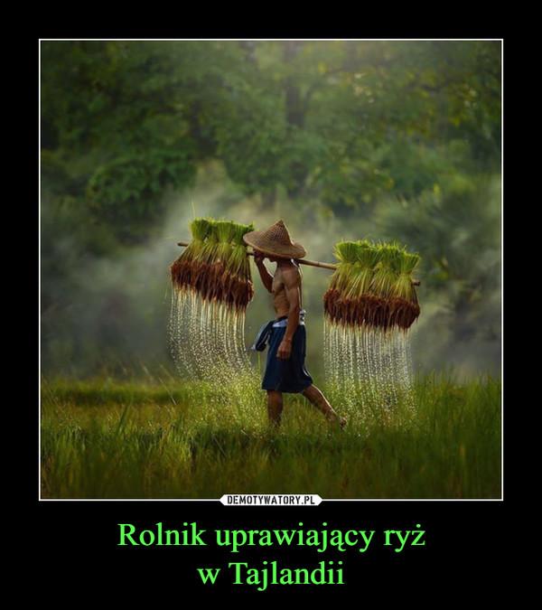 Rolnik uprawiający ryżw Tajlandii –