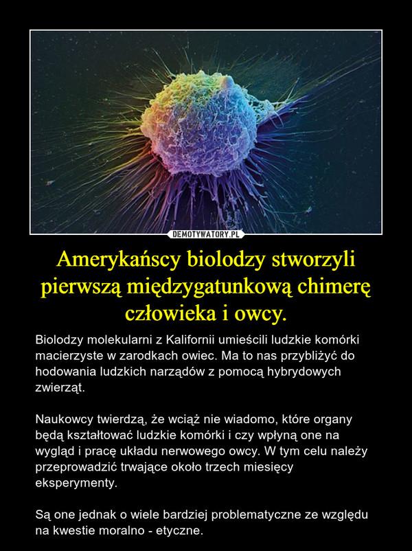 Amerykańscy biolodzy stworzyli pierwszą międzygatunkową chimerę człowieka i owcy. – Biolodzy molekularni z Kalifornii umieścili ludzkie komórki macierzyste w zarodkach owiec. Ma to nas przybliżyć do hodowania ludzkich narządów z pomocą hybrydowych zwierząt.Naukowcy twierdzą, że wciąż nie wiadomo, które organy będą kształtować ludzkie komórki i czy wpłyną one na wygląd i pracę układu nerwowego owcy. W tym celu należy przeprowadzić trwające około trzech miesięcy eksperymenty. Są one jednak o wiele bardziej problematyczne ze względu na kwestie moralno - etyczne.