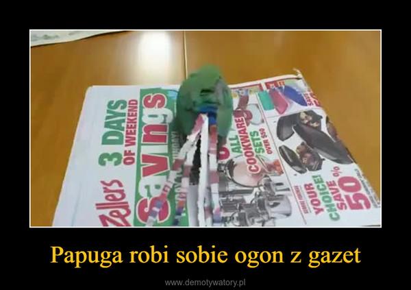 Papuga robi sobie ogon z gazet –