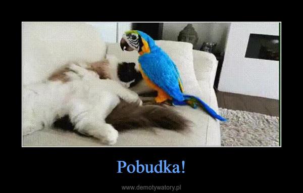 Pobudka! –
