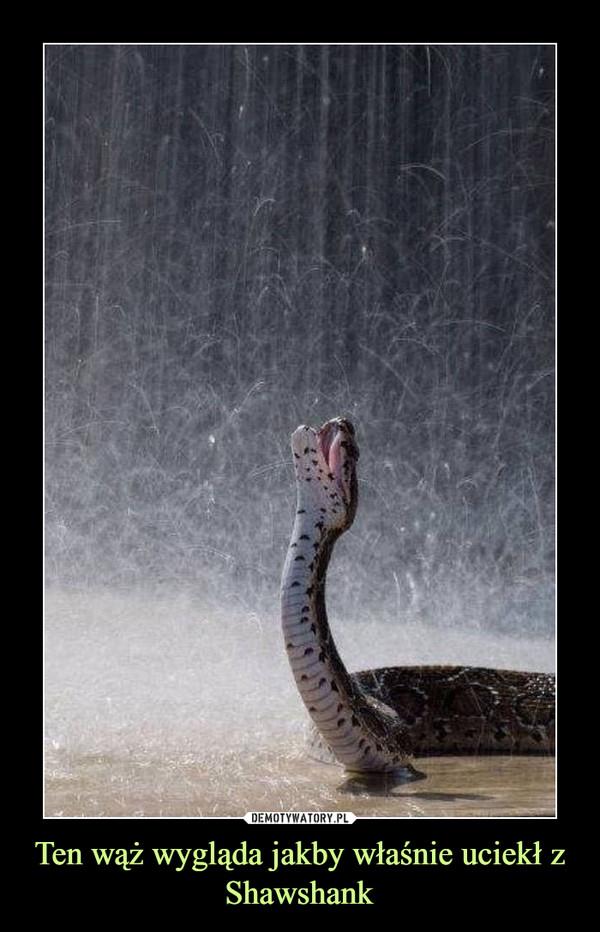 Ten wąż wygląda jakby właśnie uciekł z Shawshank –