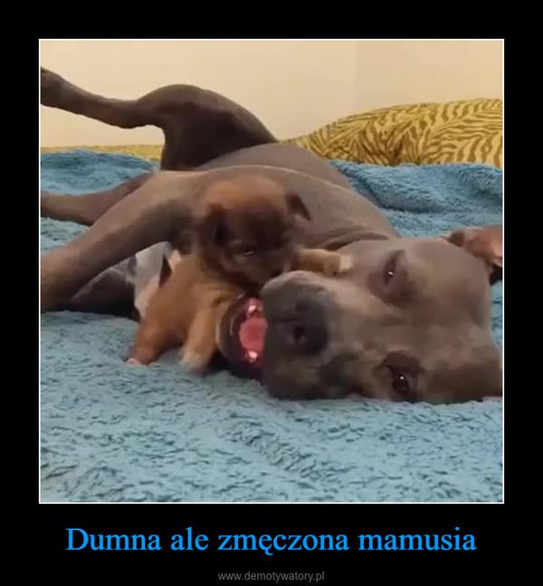 Dumna ale zmęczona mamusia –