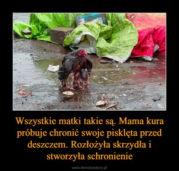 Wszystkie matki takie są. Mama kura próbuje chronić swoje pisklęta przed deszczem. Rozłożyła skrzydła i stworzyła schronienie –