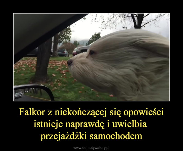 Falkor z niekończącej się opowieściistnieje naprawdę i uwielbia przejażdżki samochodem –