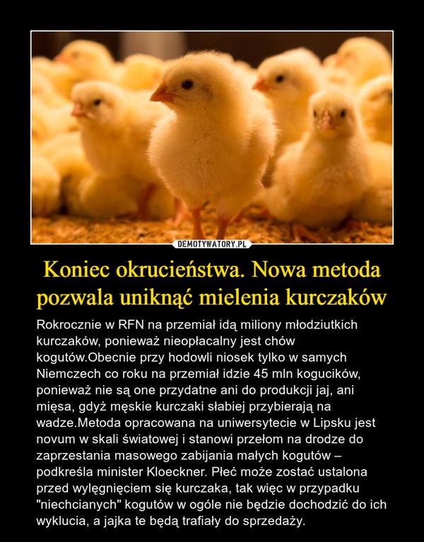 """Koniec okrucieństwa. Nowa metoda pozwala uniknąć mielenia kurczaków – Rokrocznie w RFN na przemiał idą miliony młodziutkich kurczaków, ponieważ nieopłacalny jest chów kogutów.Obecnie przy hodowli niosek tylko w samych Niemczech co roku na przemiał idzie 45 mln kogucików, ponieważ nie są one przydatne ani do produkcji jaj, ani mięsa, gdyż męskie kurczaki słabiej przybierają na wadze.Metoda opracowana na uniwersytecie w Lipsku jest novum w skali światowej i stanowi przełom na drodze do zaprzestania masowego zabijania małych kogutów – podkreśla minister Kloeckner. Płeć może zostać ustalona przed wylęgnięciem się kurczaka, tak więc w przypadku """"niechcianych"""" kogutów w ogóle nie będzie dochodzić do ich wyklucia, a jajka te będą trafiały do sprzedaży."""