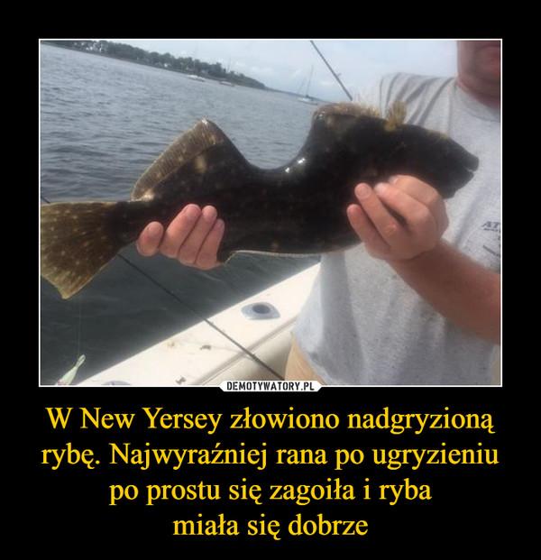 W New Yersey złowiono nadgryzioną rybę. Najwyraźniej rana po ugryzieniu po prostu się zagoiła i rybamiała się dobrze –