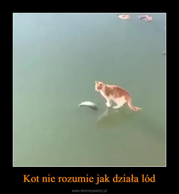 Kot nie rozumie jak działa lód –