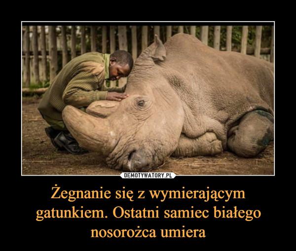 Żegnanie się z wymierającym gatunkiem. Ostatni samiec białego nosorożca umiera –