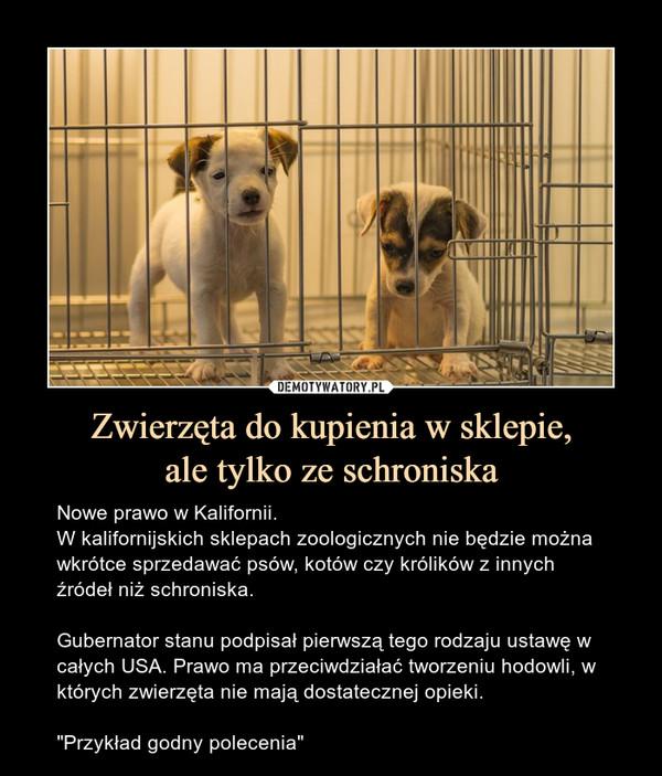 """Zwierzęta do kupienia w sklepie,ale tylko ze schroniska – Nowe prawo w Kalifornii.W kalifornijskich sklepach zoologicznych nie będzie można wkrótce sprzedawać psów, kotów czy królików z innych źródeł niż schroniska.Gubernator stanu podpisał pierwszą tego rodzaju ustawę w całych USA. Prawo ma przeciwdziałać tworzeniu hodowli, w których zwierzęta nie mają dostatecznej opieki.""""Przykład godny polecenia"""""""