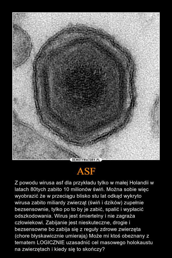 ASF – Z powodu wirusa asf dla przykładu tylko w małej Holandii w latach 80tych zabito 10 milionów świń. Można sobie więc wyobrazić że w przeciągu blisko stu lat odkąd wykryto wirusa zabito miliardy zwierząt (świń i dzików) zupełnie bezsensownie, tylko po to by je zabić, spalić i wypłacić odszkodowania. Wirus jest śmiertelny i nie zagraża człowiekowi. Zabijanie jest nieskuteczne, drogie i bezsensowne bo zabija się z reguły zdrowe zwierzęta (chore błyskawicznie umierają) Może mi ktoś obeznany z tematem LOGICZNIE uzasadnić cel masowego holokaustu na zwierzętach i kiedy się to skończy?