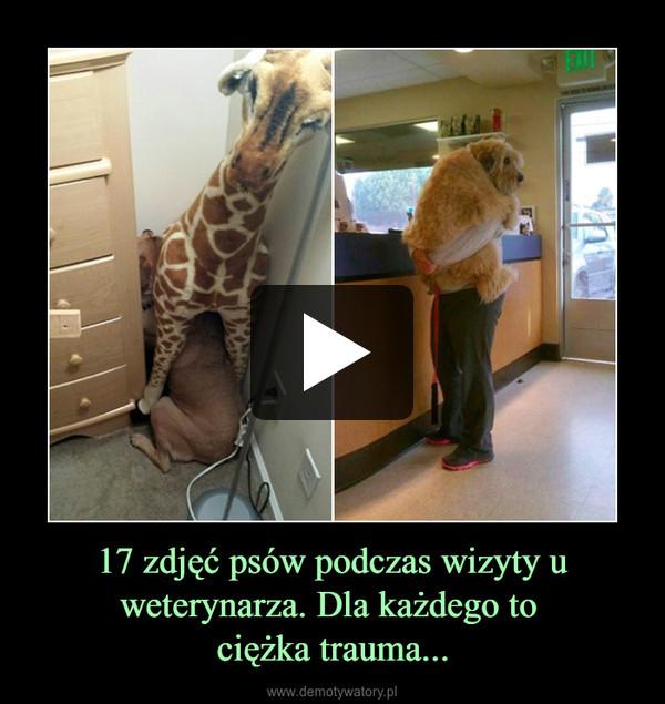 17 zdjęć psów podczas wizyty u weterynarza. Dla każdego to ciężka trauma... –