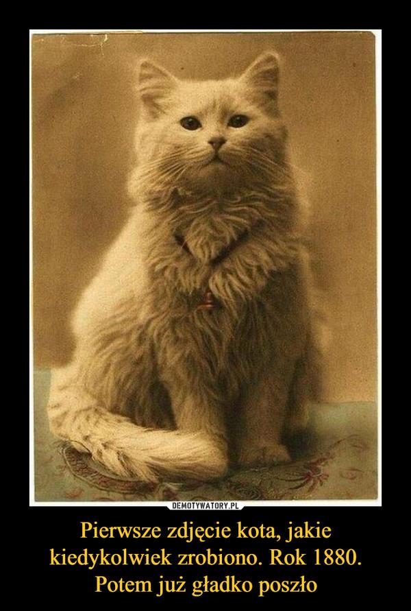 Pierwsze zdjęcie kota, jakie kiedykolwiek zrobiono. Rok 1880. Potem już gładko poszło –