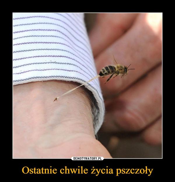 Ostatnie chwile życia pszczoły –